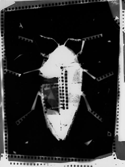 .Print Bug. by serdarb