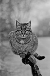 Bilkent - Graphics Cat