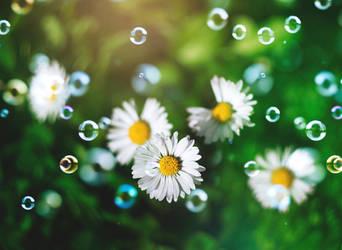Bubbly daisy