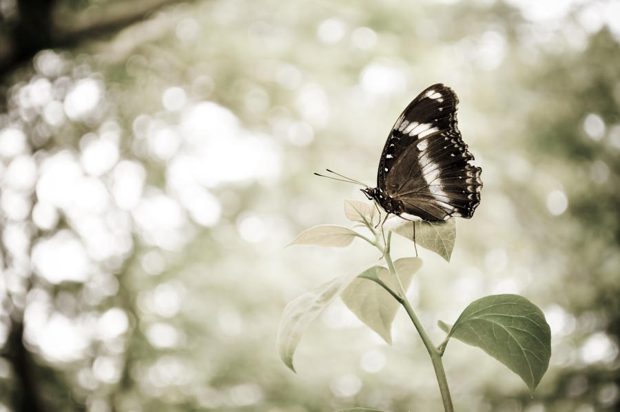 Butterfly flying away - photo#2