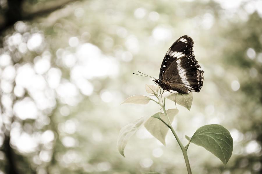 f00529820 Butterfly Fly Away by missfotografie on DeviantArt