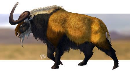 Ciarron Cattle