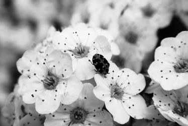 Little memory by Smile-Denise