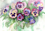 Pansies from life