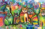 City Cats  revamp.