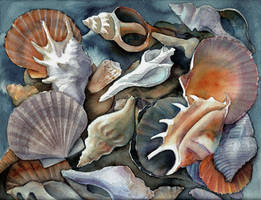 Box of shells I