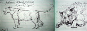 Study Notes Sketches: Lions