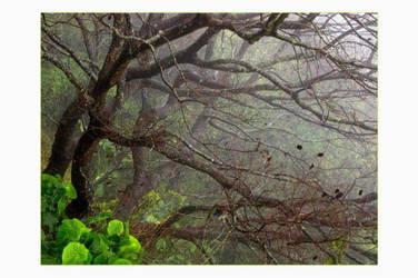 A foggy morning by J4n3T
