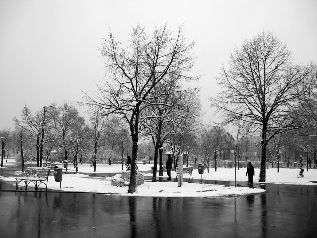 Black and White Winter by danionica on deviantART