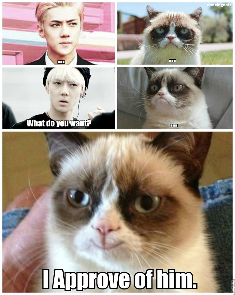 Oh Sehun_Grumpy Cat_MACRO by dancingdots