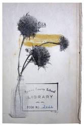 Bloom by travishencey