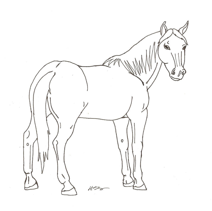 Horse line drawing - photo#12