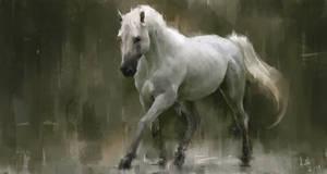 White horse in the rain