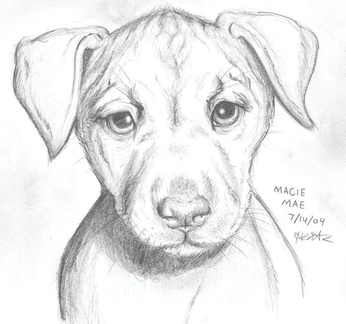 How To Draw A Puppy In Pencil