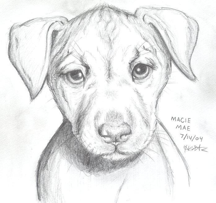 Puppy Dog Eyes By KaleyObsidia On DeviantArt