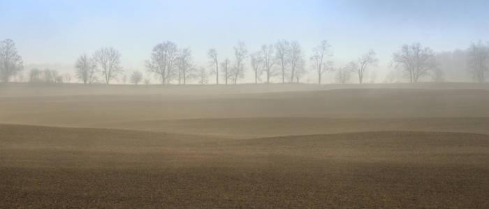 Fog on Field