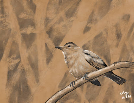 Grey Catbird on Halftone