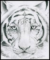 White Tiger by KaleyObsidia