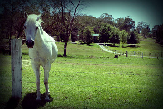 Horses in the fields 3