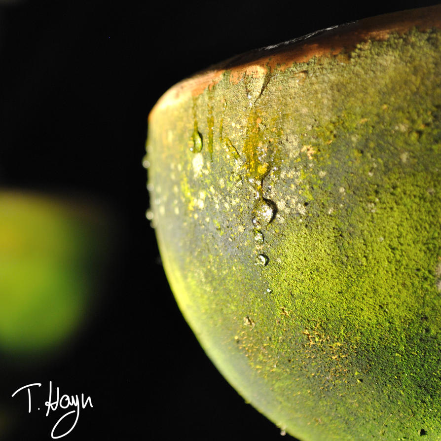 wet clay jug 1 by TobbiH