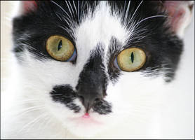 Kitty by ShaunJoyce
