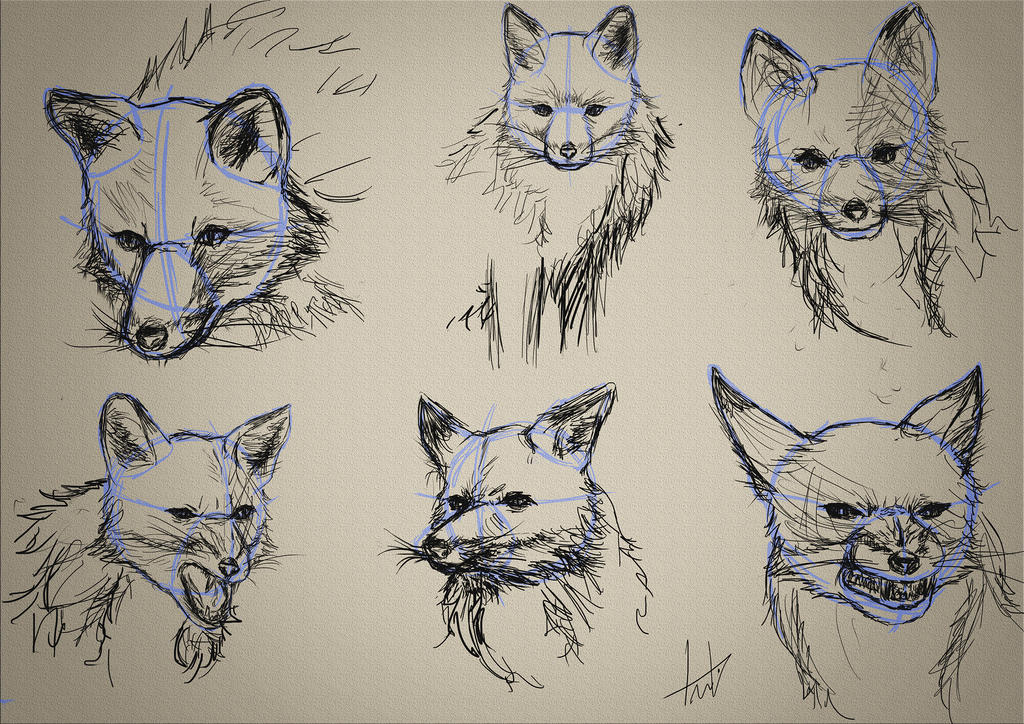 Sketch Fox by LouizBrito