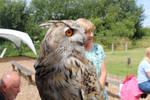 Siberian Eagle Owl #1