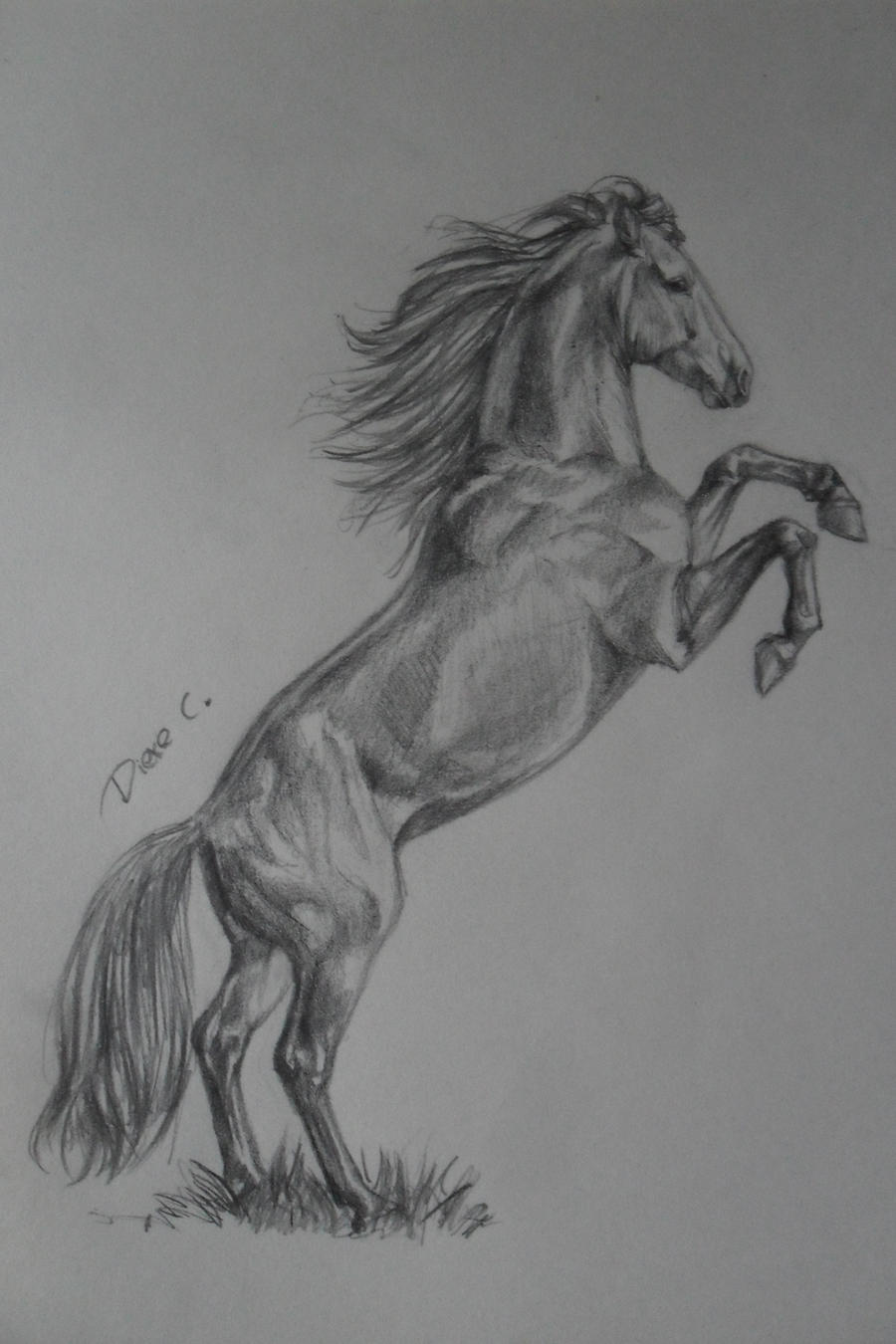 Pencil Drawings Of Horses Of Objects Tumble Of Flowers Of ...  |Horse Art Drawings