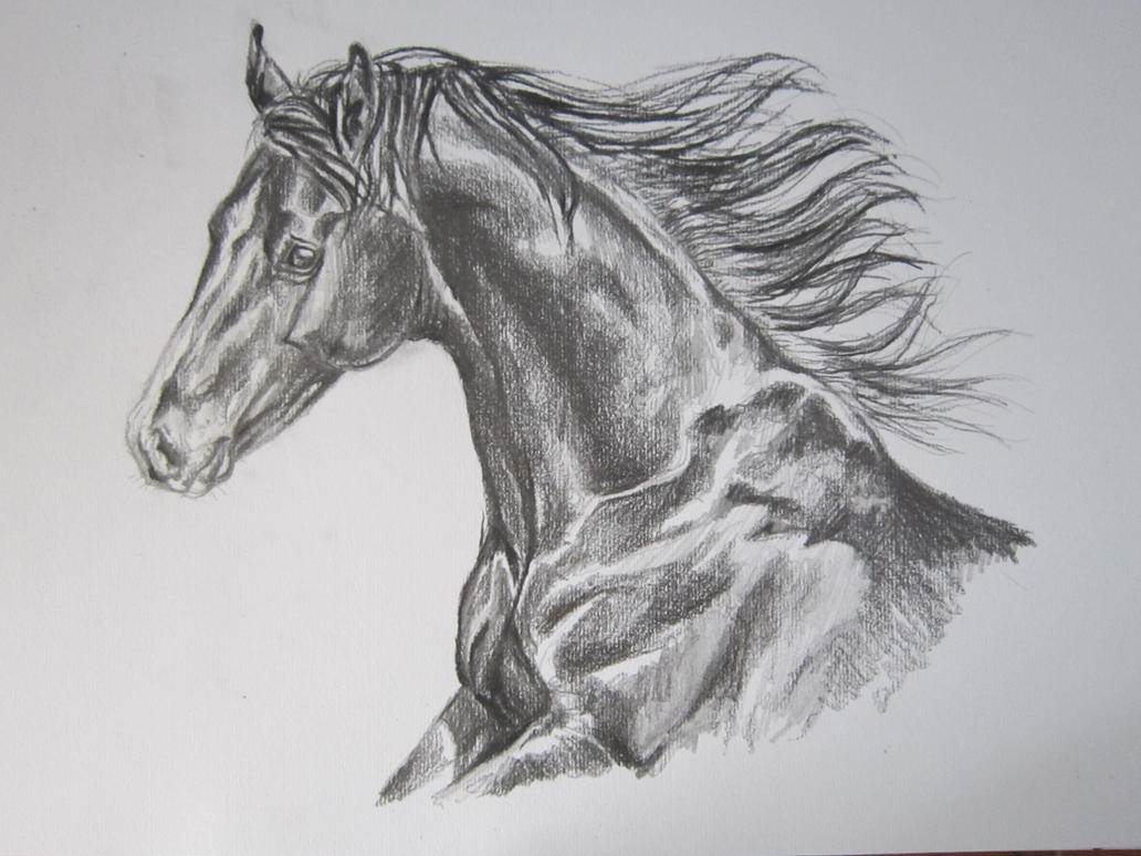 Realistic Horse Drawings Horse drawings by whysowhiteRealistic Horse Drawings