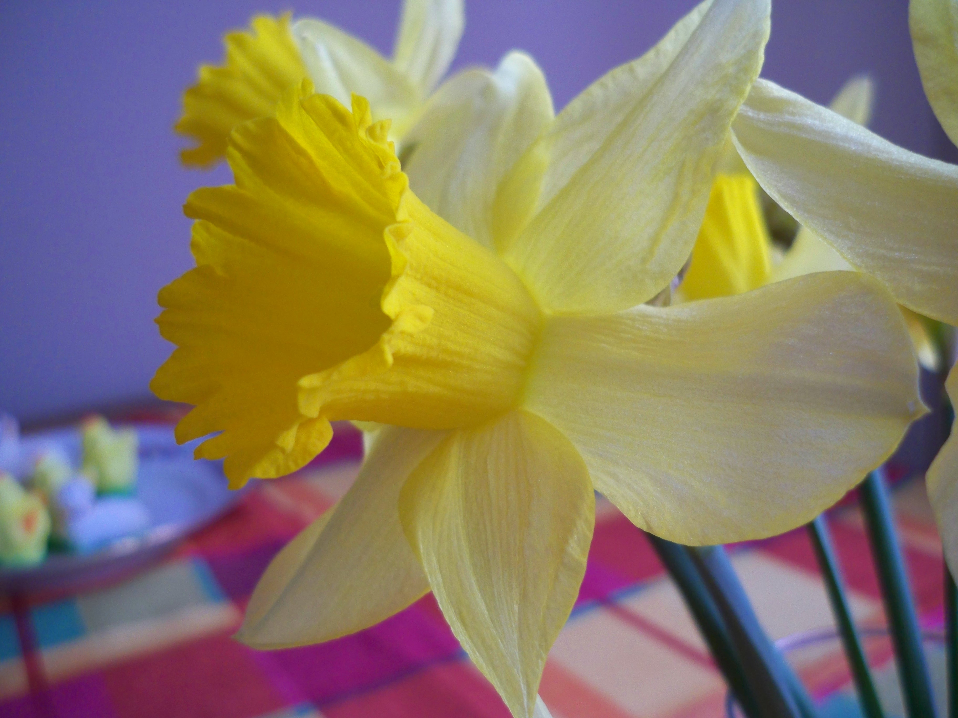 Jonquil Flower by korsarz on DeviantArt