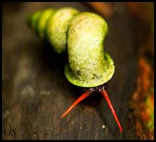 snail by JS2010