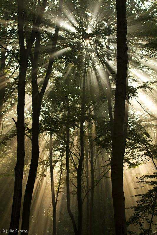 Misty Morning Light by JS2010
