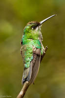 Humingbird 2 by JS2010