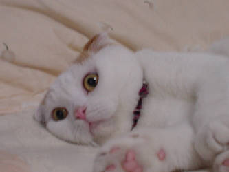 My Cat 2 by vipmib
