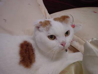 My Cat 3 by vipmib