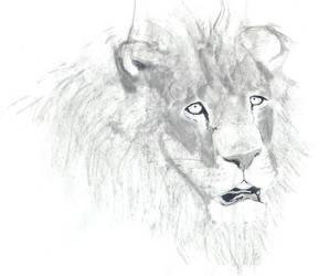 Lion head by vipmib