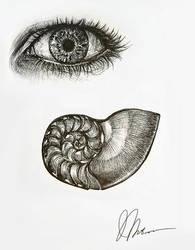 Nautilus by Jiuta