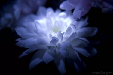 In the dark by msLazy