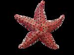 Under the Sea - Pink Starfish