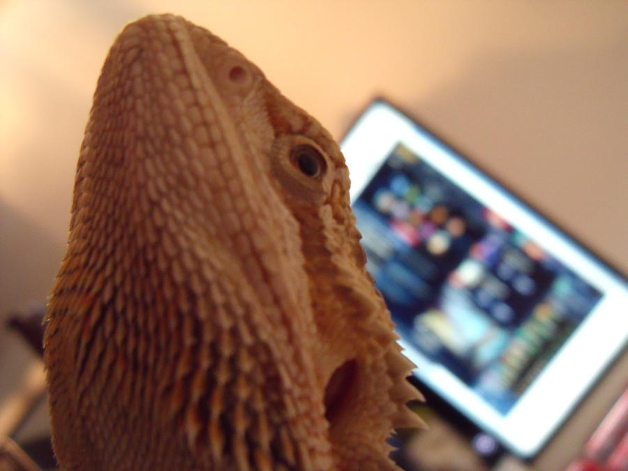 KyraShangea's Profile Picture