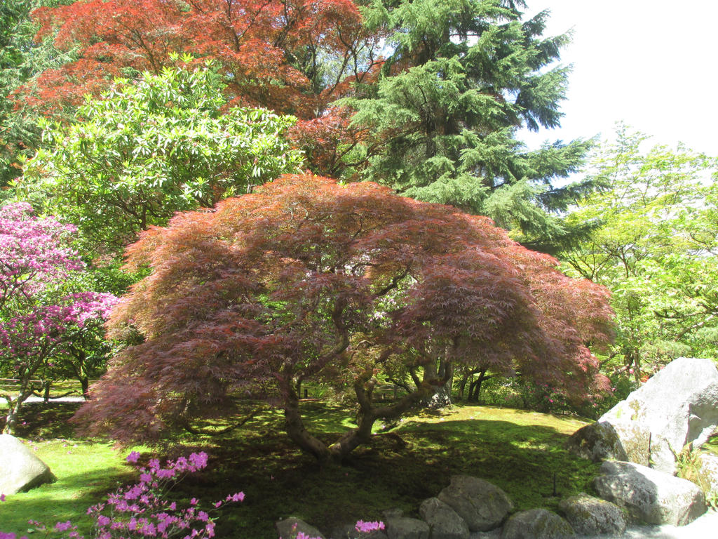 Tree at the Japanese garden by Tsuya-hasu on DeviantArt