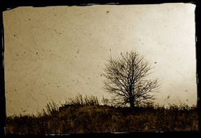 Dead born tree by branislavboda