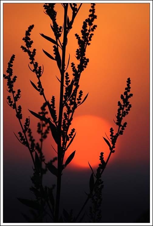 Poster sunset by branislavboda