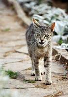 Hungry cat by branislavboda