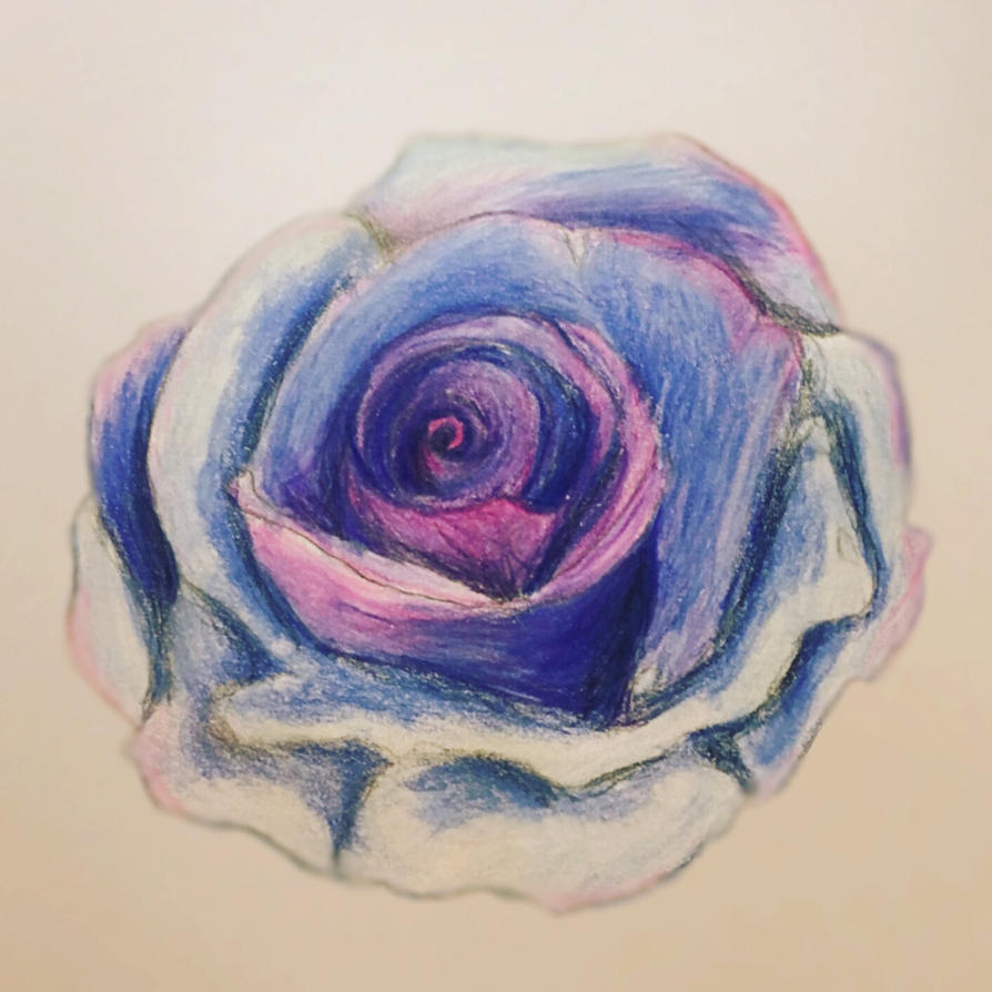 Traditional rose drawing, PC colored pencils  by primarycolor92