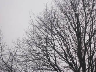 Desolate Days by XxxNekoxShoujoxxX