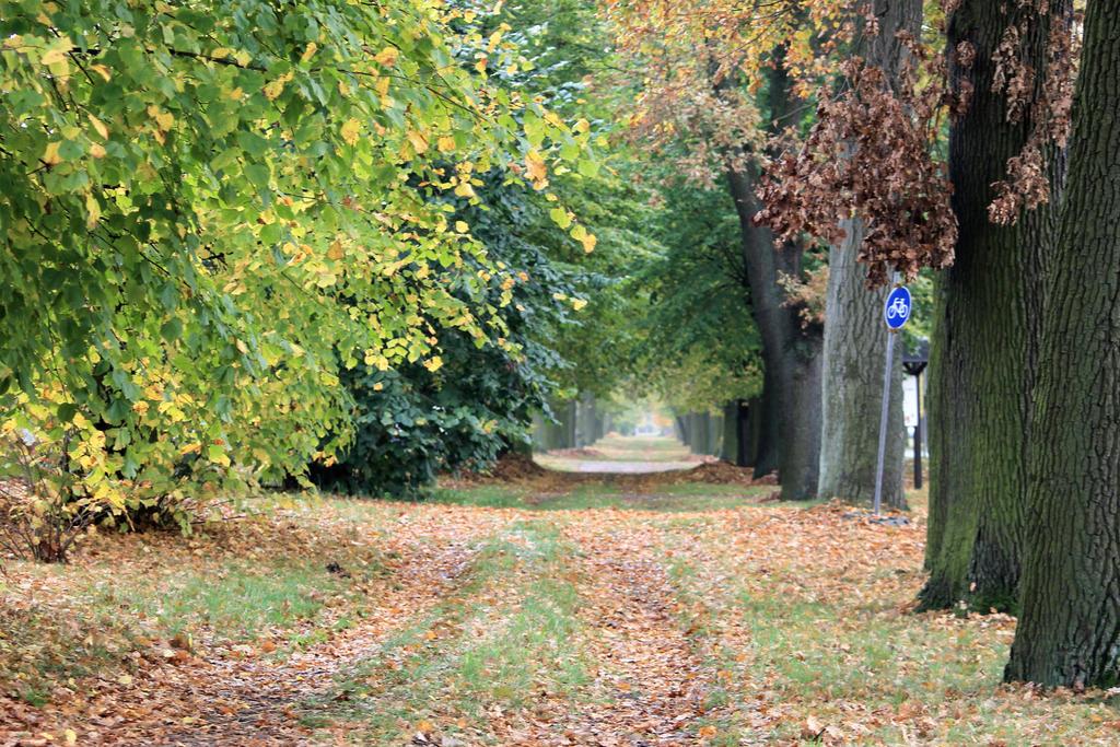Autumn Way by Phuindrad