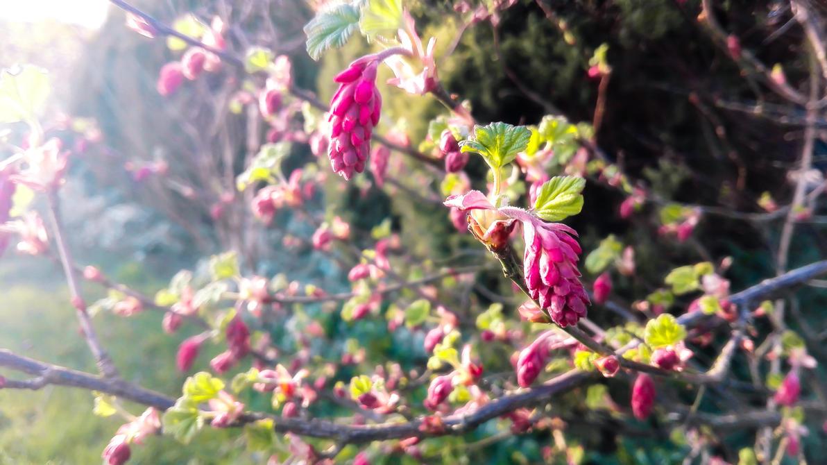 Pink spring by DinowCookie