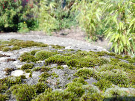 Moss foreground - free stock by DinowCookie