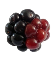 Blackberry 4 - free png stock by DinowCookie